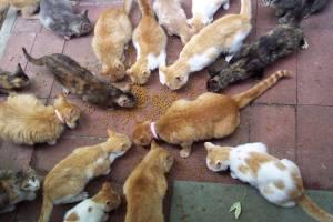 96139-cats-17-cats
