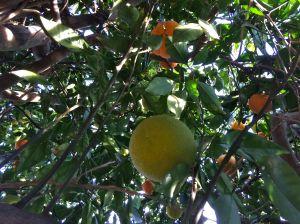 inside tree1