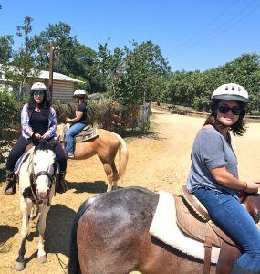 horses rachael