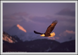 EagleAgainstMountains_a_001